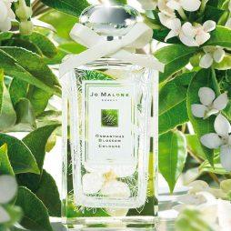 Osmanthus Blossom Jo Malone